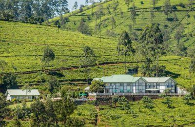 Langdale Bungalow, Nuwara Eliya, Sri Lanka, Tea plantation