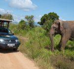 Udawalawa National Park, Sri Lanka, Mahoora Safari Camping site, Elephant Trekking