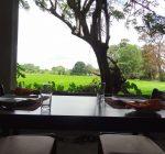 Wilpattu Corridor, tree house, wildlife, sri lanka